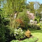 Tuin in de bloei